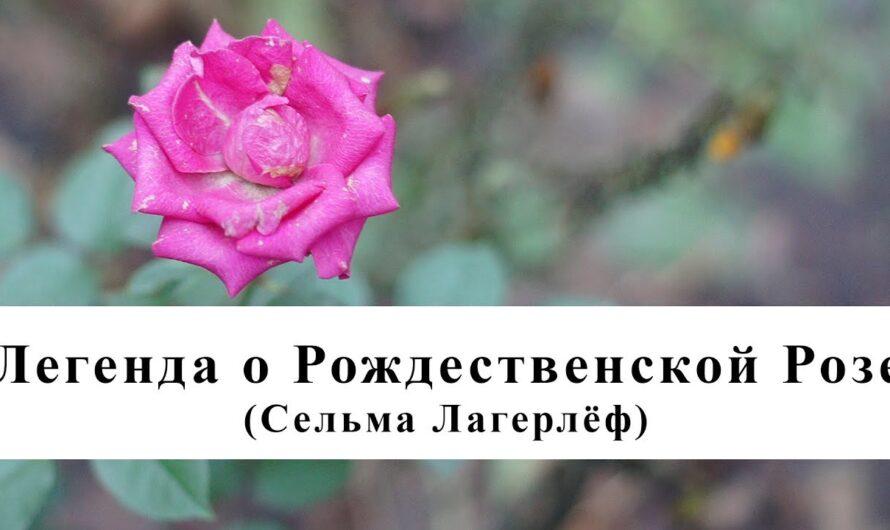 Легенда о Рождественской розе (Сельма Лагерлёф) / Аудиокнига