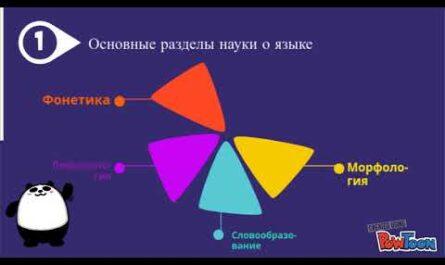 Основные разделы науки о языке