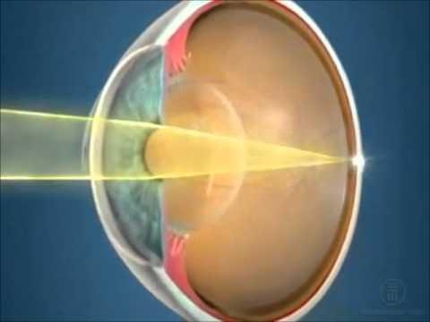 зрение, строение глаза