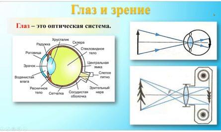 Глаз и зрение  Очки