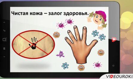 2  Надёжная защита организма
