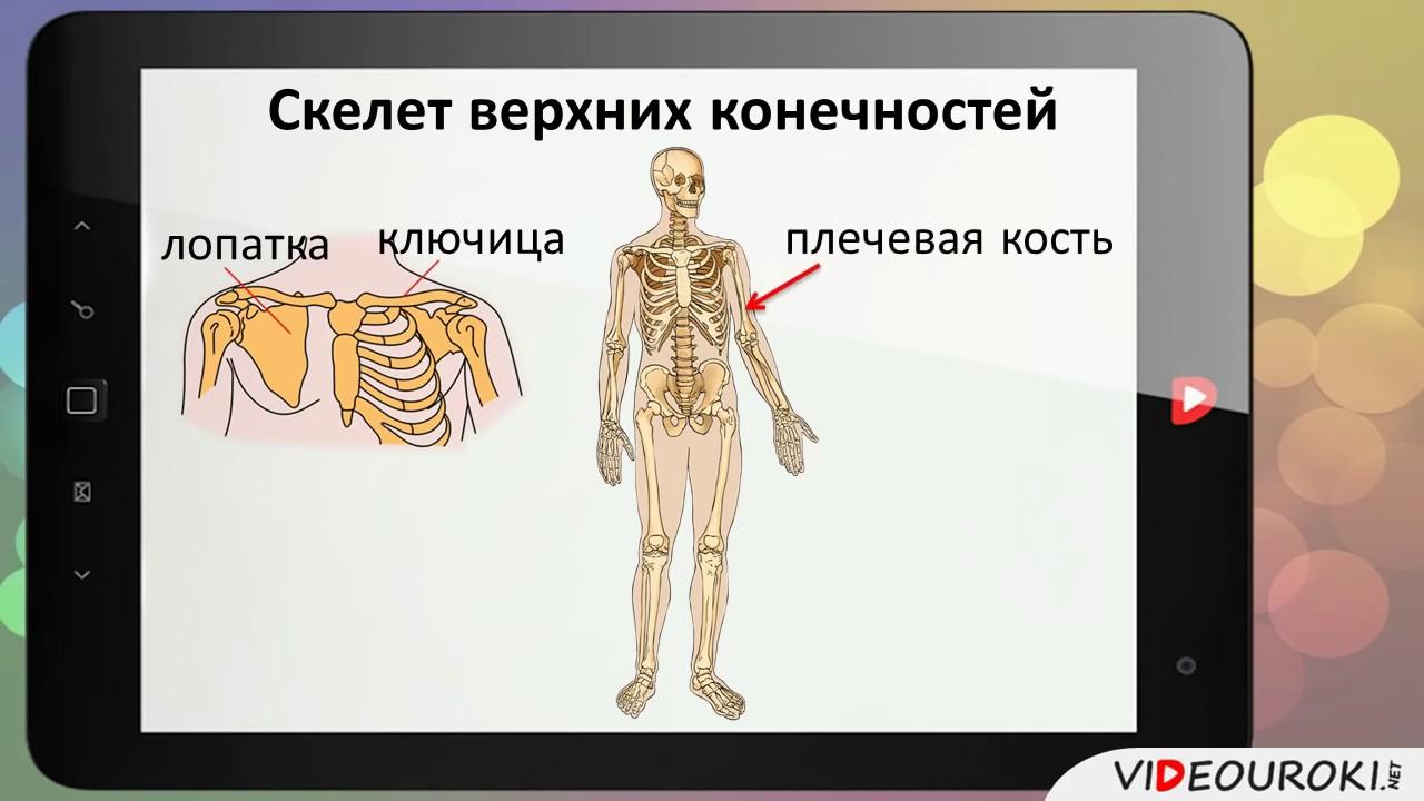 18 Опора тела и движение