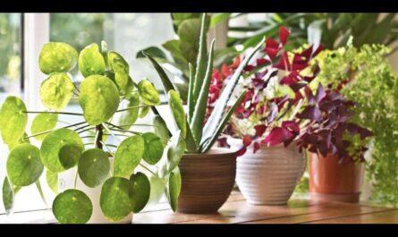 """Окружающий мир 1 класс ч.1, тема урока """"Как живут растения?"""", с.70-71, Школа России."""