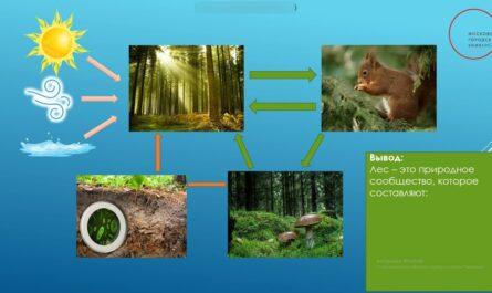 Земля-кормилица. Жизнь леса. Окружающий мир. 4 класс.