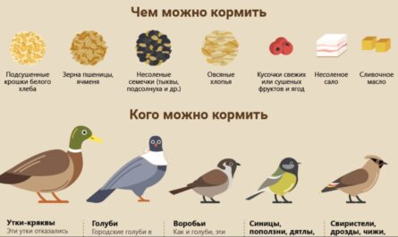 """Окружающий мир 1 класс ч.1, тема урока """"Как зимой помочь птицам?"""", с.74-75, Школа России."""