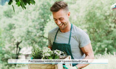 Урок 15  как живут растения и животные   Окружающий мир   1