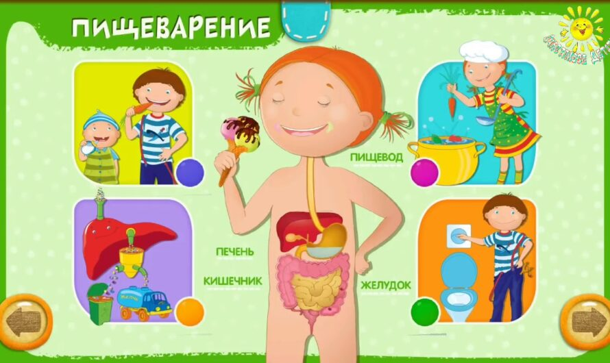 Анатомия для детей – строение тела человека просто и понятно