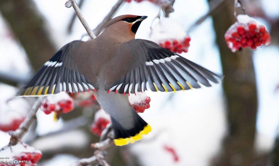 Как зимой помочь птицам