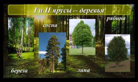 Жизнь леса