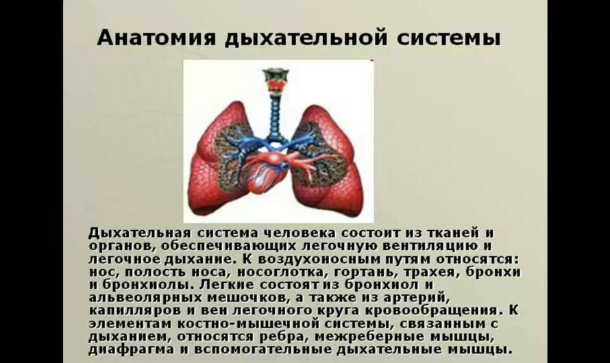 дыхание и кровообращение презентация 3 класс плешаков